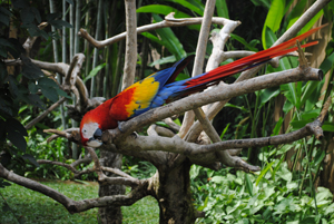 HALFDAY AMAZING BALI BIRD PARK